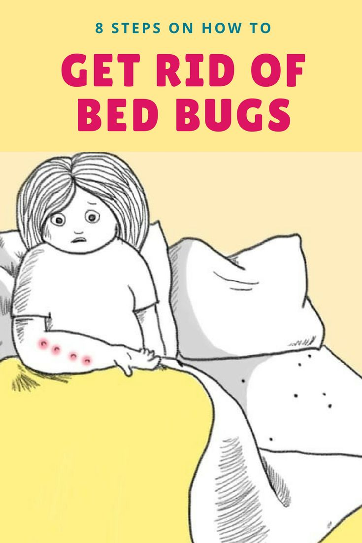 25 Unique Bed Bugs Ideas On Pinterest Bed Bug Spray