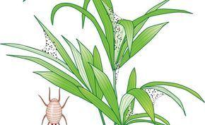 Spinnmilben sind typische Winterschädlinge auf der Fensterbank. Sie werden erst bei trockener Heizungsluft so richtig munter und können an Zimmerpflanzen großen Schaden anrichten.
