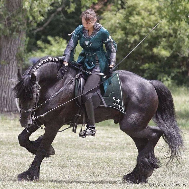 a huge Friesian breed in Renaissance Faire fair costume. Friesian is a horse breed originating in Friesland, in the Netherlands. Used in medieval time to carry knights to battle. Tho built similar to a draft horse, Friesians are graceful and nimble for their size. Typically black, they have extremely long manes and tails that are never cut.