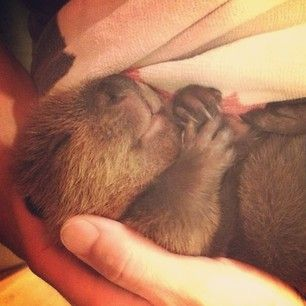 …yep, they are. | 19 Reasons Baby Beavers Are The Most Underrated Woodland Critters