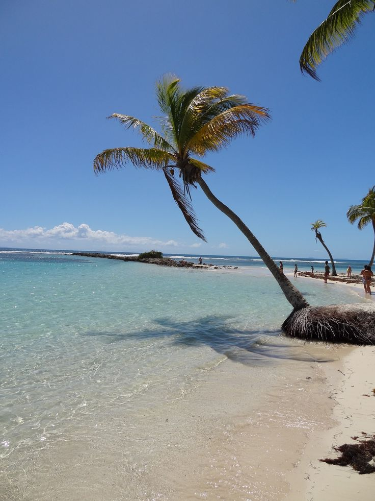 Plage Sainte-Anne - Photos de vacances de Antilles Location #Guadeloupe