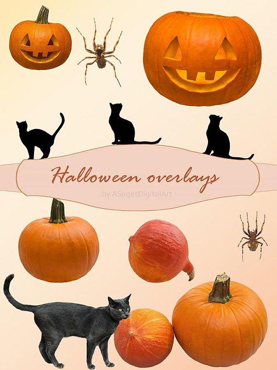 Halloween overlays pumpkin overlay cat spider overlays