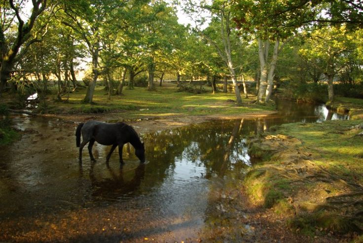 UK, England, Hampshire, New Forest.  Okay, so, can't have the ocelot from CR, but, can I pet a pony?   I will visit one day...that IS a threat!