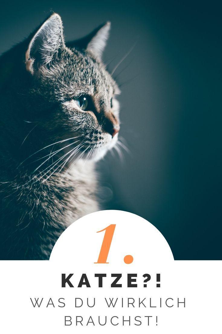 Erste Katze Was Du Als Katzenhalter Wirklich Brauchst Katzen Katzenhaltung Katzen Kaufen