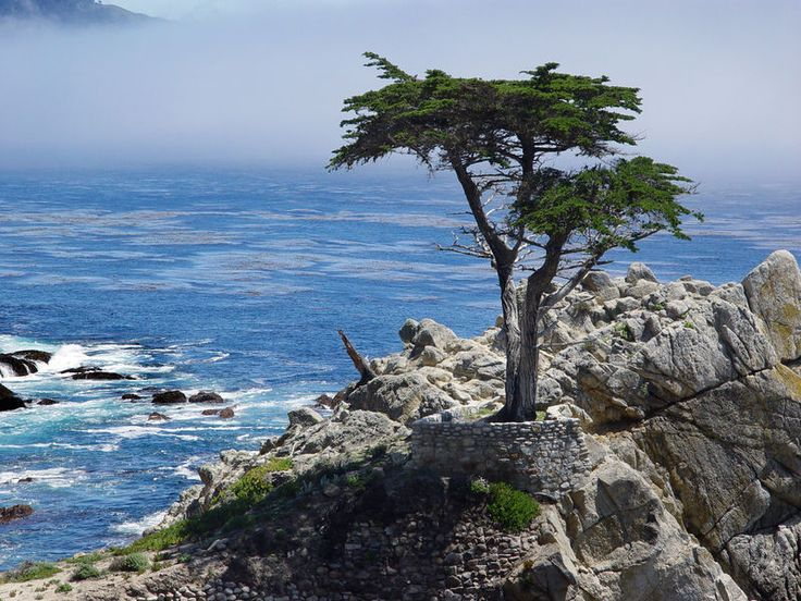 17-Mile Drive is a scenic road through Pacific Grove and Pebble Beach on the Monterey Peninsula all the way to Carmel in California.
