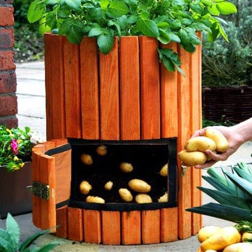 Alternative Gardning: One potato. Two potato. Grow 100 pounds of potatoes in a barrel