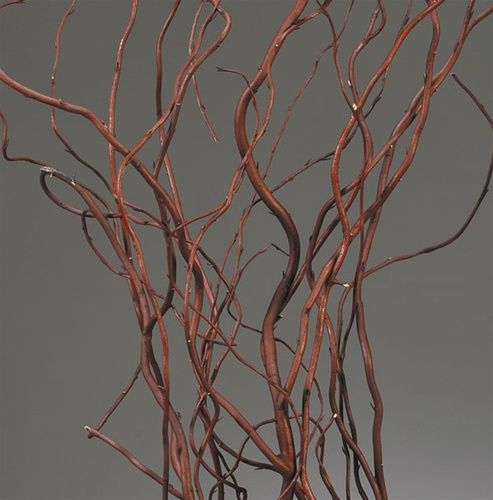 Dark Curly Willow (Weddings, Events, Centerpieces)