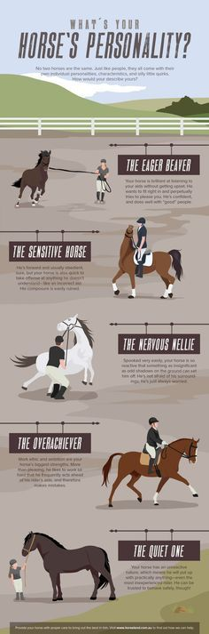 Know more about your equine friend. Check this guide on horse's personality.