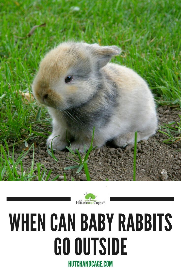When Can Baby Rabbits Go Outside In 2020 Cute Little Animals Pet Rabbit Care Animal Jokes