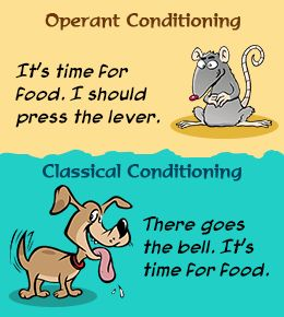 understanding the classical conditioning and operant conditioning In dog training understanding classical conditioning is a powerful piece knowledge as we work from training to behavior modification it's the #1 concept.