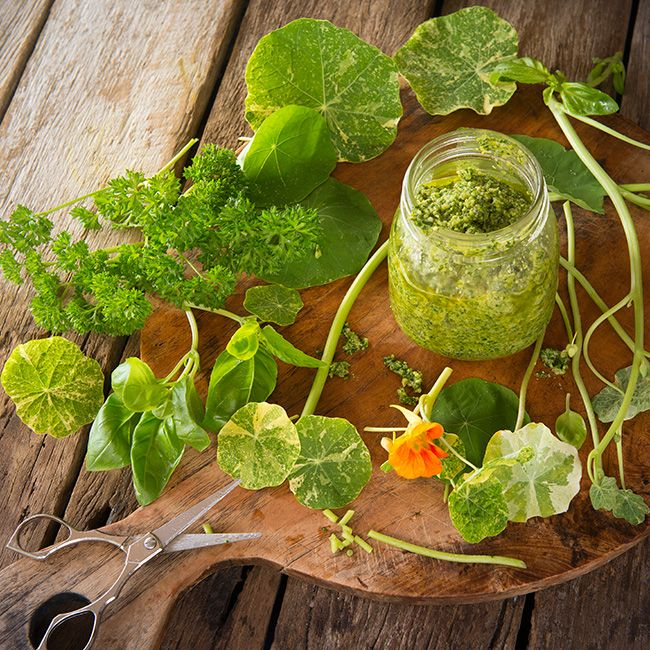 Nasturtium Pesto which includes a combination of both the Nasturtium leaves, stems, basil leaves and parsley.