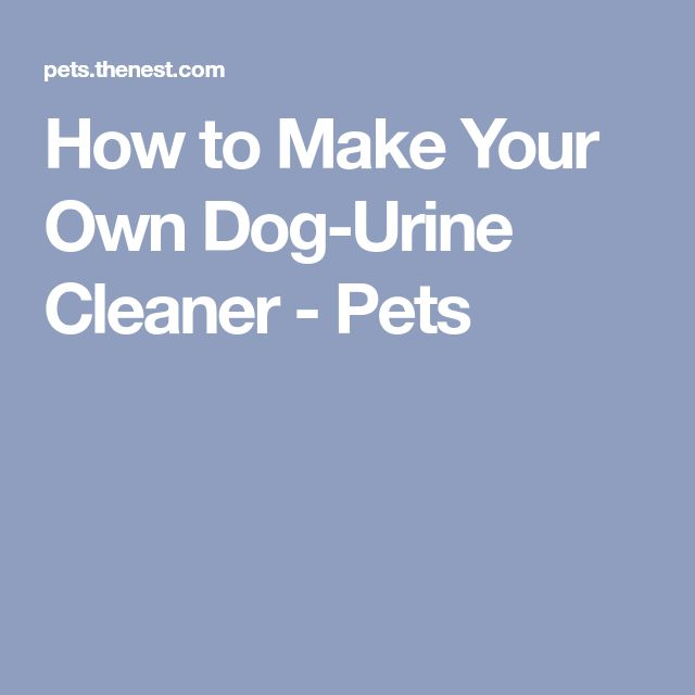 How to Make Your Own Dog-Urine Cleaner - Pets