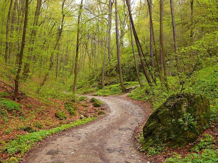 Lillafüred - Forrás-völgy, tavasz 2. (Bükk Mountains, the Forrás Valley at springtime)