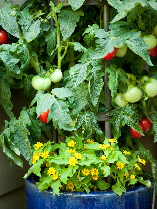 25 best ideas about patio tomatoes on pinterest diy planters outdoor planters and planter boxes - Best tomato plants for container gardening ...