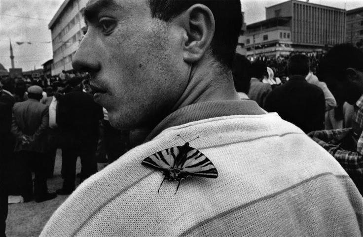 © Niko Economopoulos