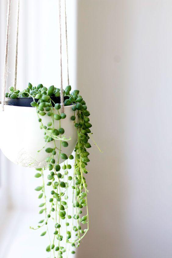 Industrial interiorと 相性の良い植物 吊るす観葉植物 グリーンネックレス