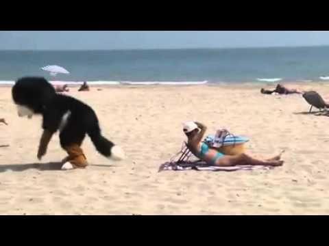 Песик шкодит на пляже