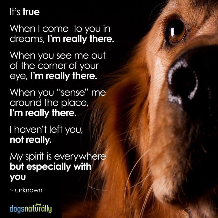 This really hits home for me. Whenever my dog disappeared I dreamt about him all the time, and it really felt like he was still there with me. It's hard to believe that I'll ever love another dog the way I loved him.
