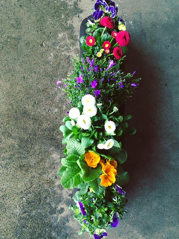 Fruhlingsblumen Fruhlingspflanzen Fruhlingsblumen Balkon Pflanzen