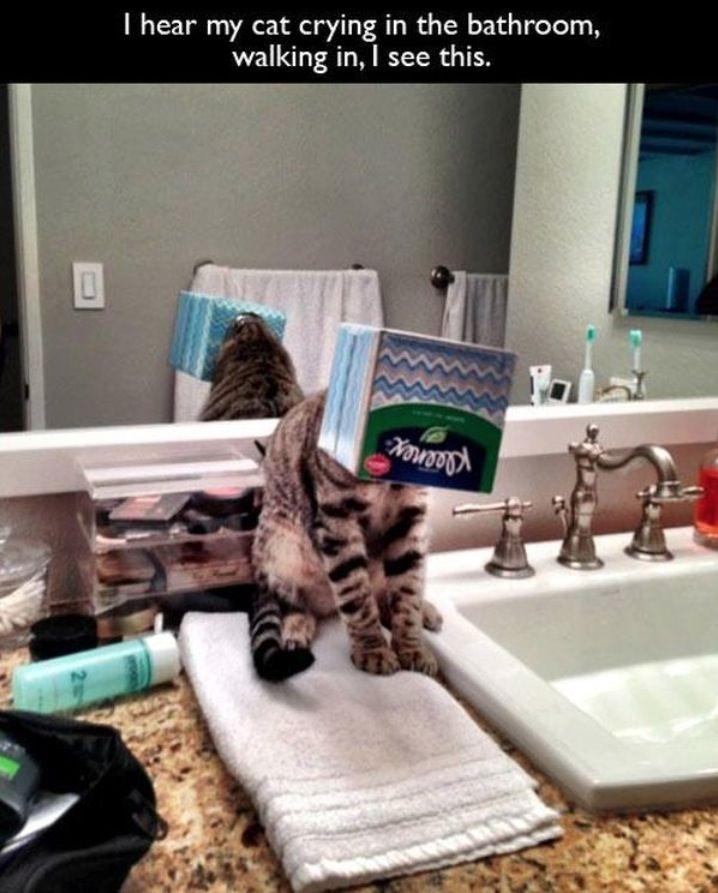 I Hear My Cat Crying in the Bathroom: My Cat Needed a Kleenex Tissue Box on Head ----