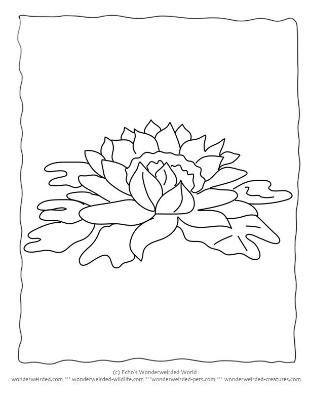 Free Coloring Pages Of Even Flowers Templates