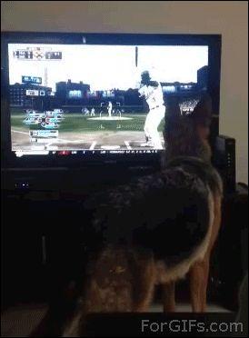 Este perro que se enojó tanto por ese lanzamiento que no lo pudieron detener. | Los 47 GIFs de perros más increíbles de 2013