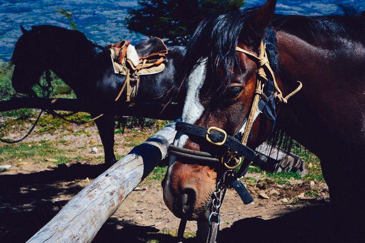 Horses in Cerro Castillo, Chile. http://www.raices.co.uk