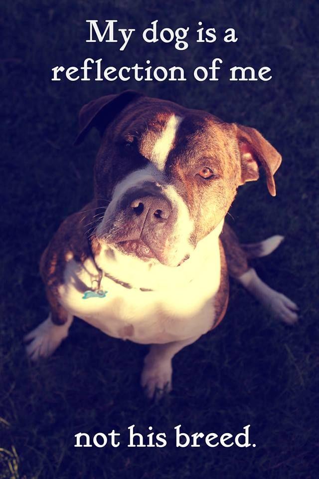 Https Www Pinterest Com Explore Rescue Dog Quotes