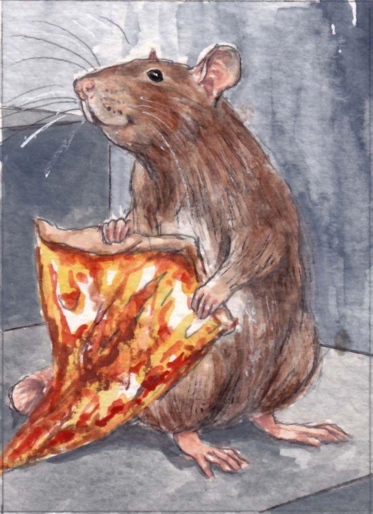 1426 best Rats images on Pinterest | Pet rats, Fancy rat and Rodents