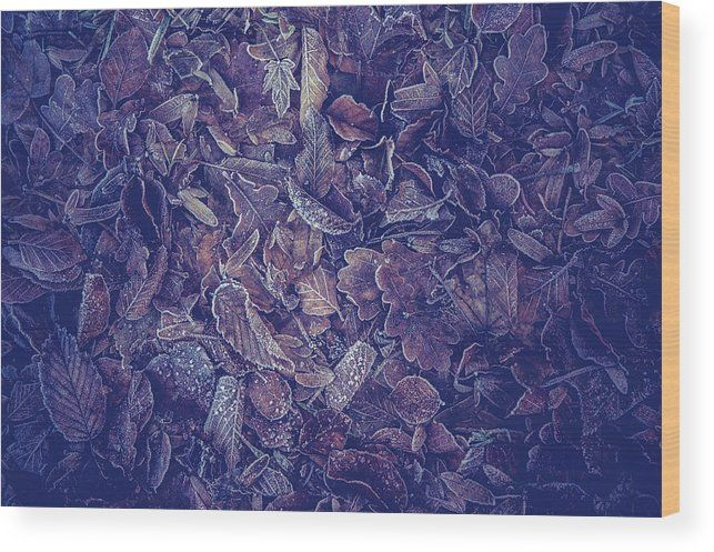 Jenny Rainbow Fine Art Photography Wood Print featuring the photograph Purple Carpet Of Frozen Leaves by Jenny Rainbow