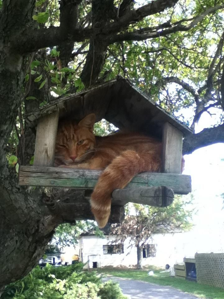 Silly cat, that's a bird house! - Imgur