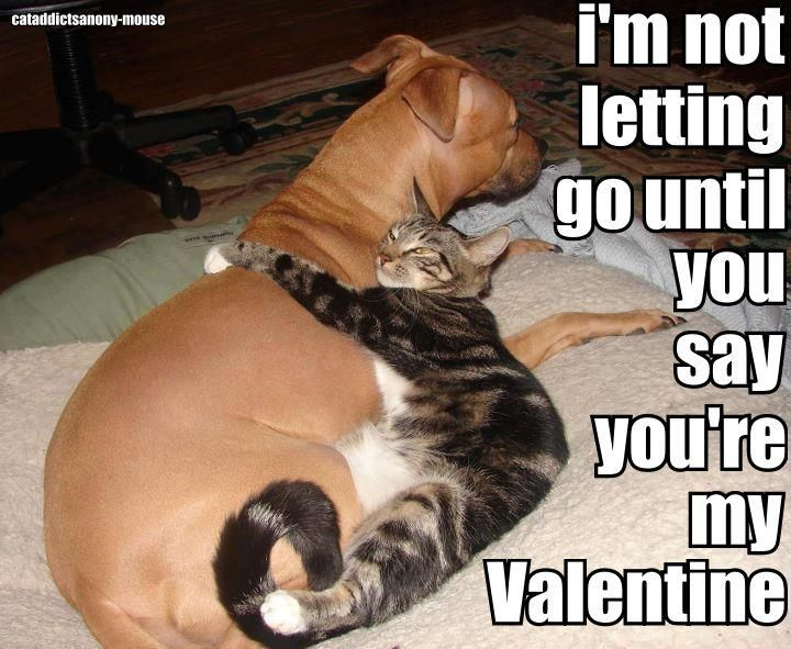 28 best images about valentine 39 s pets on pinterest cats - Valentine s day animal pics ...