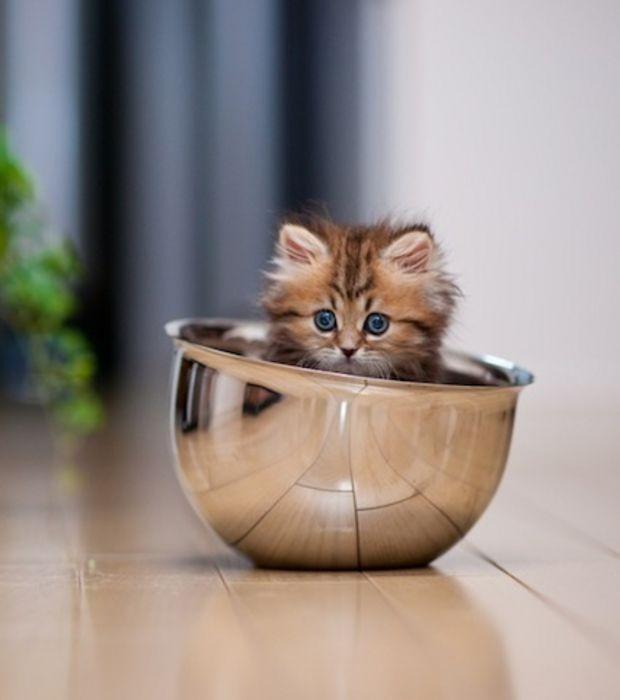 La petite taille du chat Daisy la rend encore plus adorable