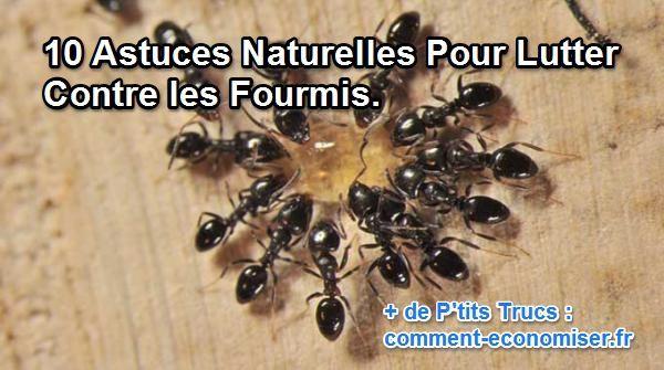 10 Astuces Naturelles Pour Lutter Contre les Fourmis.