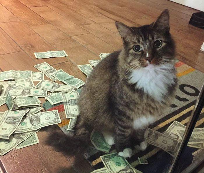 История кота, который крадет деньги для бездомных людей http://fito-center.ru/zhivotnyy-mir/66928-istoriya-kota-kotoryy-kradet-dengi-dlya-bezdomnyh-lyudey.html  Он живет в офисе маркетинговой фирмы GuRuStu, который находится в центре города Талсы (штат Оклахома, США). О его выходках узнали, когда Стюарт МакДэниел, учредитель фирмы, пришел утром на работу и обнаружил купюры у двери, где обычно дремлет Сэр Вайнс-Э-Лот. «Это повторялось снова и снова, но мы не могли найти этому объяснения…