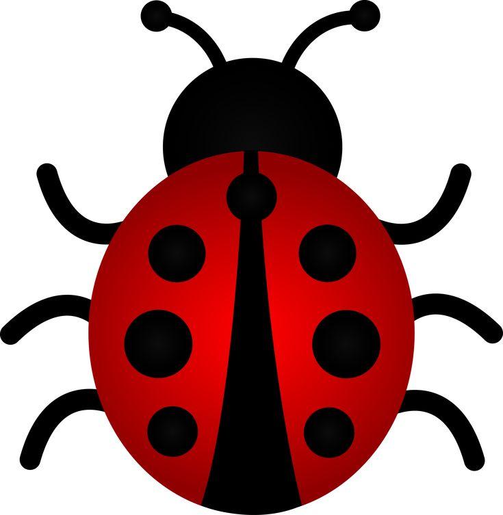 Ladybugs  Lady bug and Little red on Pinterest