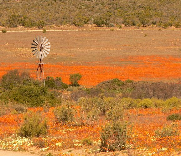 Namaqualand – South Africa