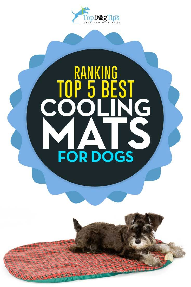 What's the Best Dog Cooling Mat? Taking a Look at Top 5 Choices. It's that time of year – pet owners are looking for any way to help their canine companions beat the summer heat. Some dogs enjoy a trip to the lake for a swim, but how do you help a dog that doesn't enjoy the water? Purchasing the best dog cooling mat is a great way to give Fido an escape from the sun. #dogs #pets #cooling #coolmats #mats
