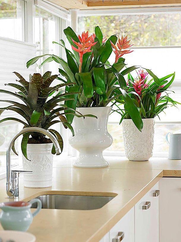 46 besten Zimmerpflanzen Bilder auf Pinterest Gardening, Gärten - indoor garten wohlfuhloase wohnung begrunen