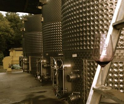 Wines are resting comfortable in the tanks after harvest
