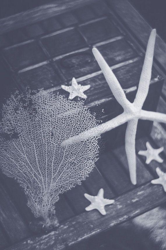 Starfish Still Life Photograph Print  Star by PacificCoastPrints