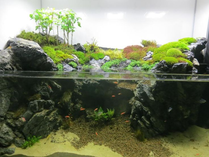 90g Cliffside Paludarium Build Thread