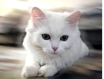Isn't she cute?? But, cats are a significant source of odors.