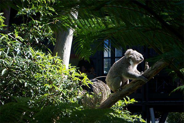 MUNDO: Caravan Trip around Queensland Coast | Luna in viaggio
