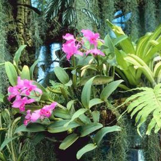 How To Attach Orchids To Trees Yard Amp Garden Orchids
