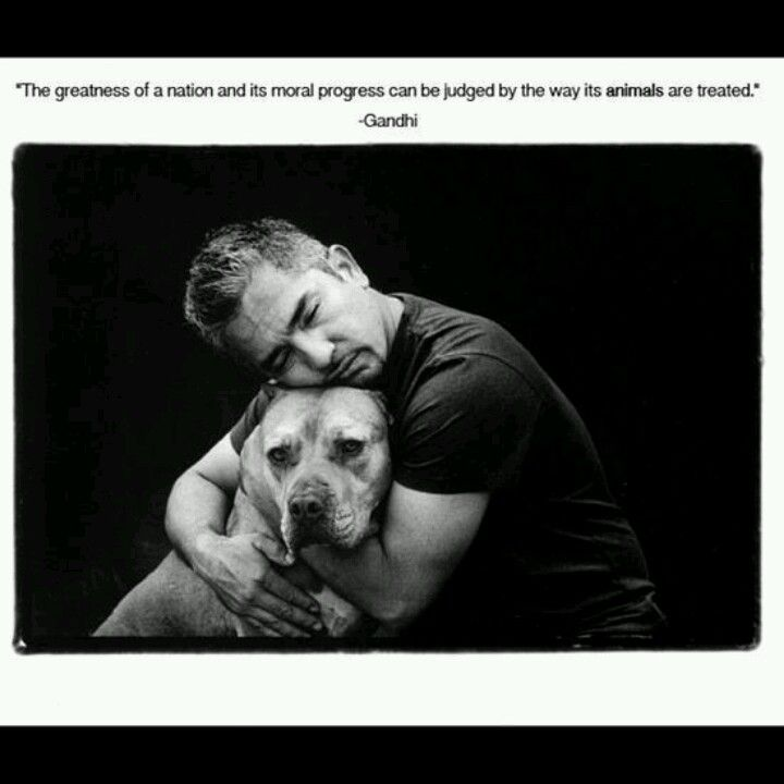 Ceasar Milan, Great Quote.