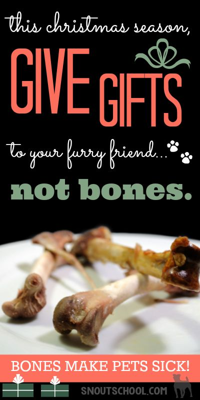 Keep dogs & cats safe this Christmas! Give Christmas gifts, not bones. If you're a veterinarian or vet tech - share to remind pet parents! www.snoutschool.com