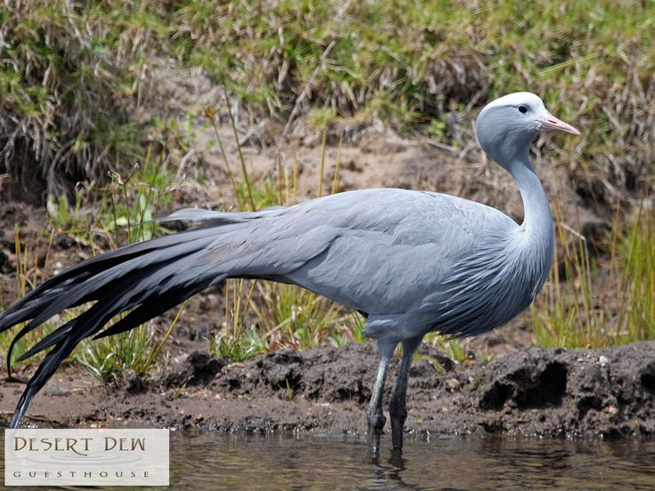 On this beautiful farm there are more than 80 different bird species, as well as the protected Blue Crane. Link: http://ow.ly/vqY1307Wkd2