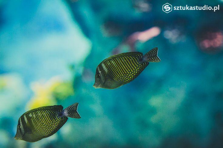podwodne zdjęcia ryb. Nemo? ;) www.sztukastudio.pl fotografia ślubna, film, design, fotografia podwodna