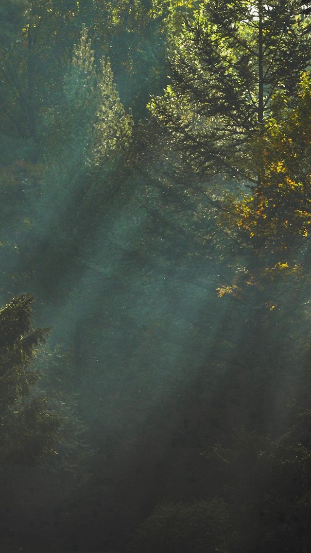 Wood Nature Tree Sunshine Light #iPhone #5s #wallpaper